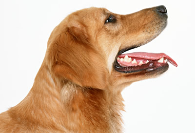 3歳以上の犬猫の80%が歯周病!?